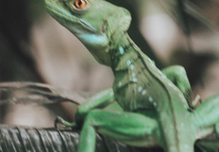 Guide to Costa Rica : San Jose &Tortoguero
